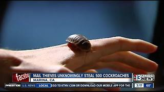 Mail thieves stole cockroaches - Video