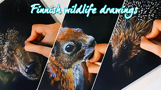 Stunning time lapse of Finnish wildlife drawings - Video