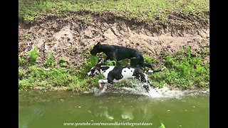 Playful doggies love running through dirt and water