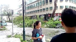 Tree Falls as Typhoon Hato Batters Macau - Video