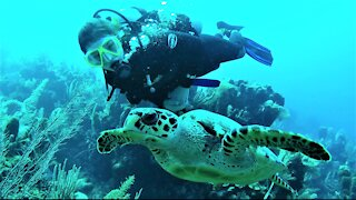 Endangered hawksbill sea turtle calmly swims over the reef with young scuba diver