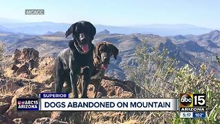 Dogs found abandoned on Arizona mountain - Video