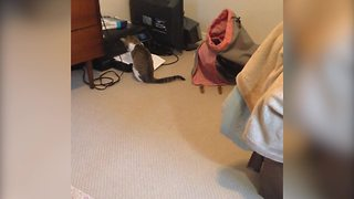 Funny Cat Discovers A Home Printer - Video