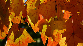 Fall foliage: Best spots right now - Video