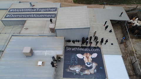 Activists Occupy Roof of Adelaide Slaughterhouse Accused of Animal Abuse