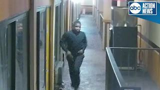 Investigators search for man who fired shots off Tampa motel balcony - Video