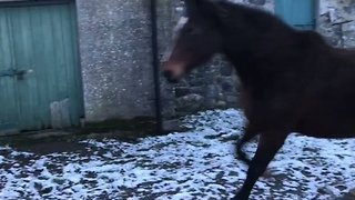 Horses Take One Look at Snow And Decide It's Not For Them - Video