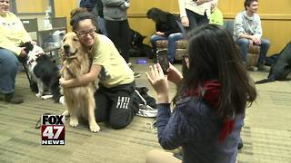 Community mourns loss of Sparrow therapy dog