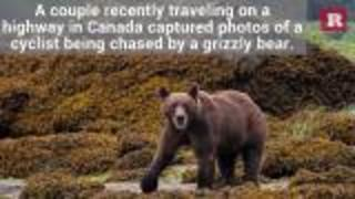 Highway drivers rescue cyclist being followed by a grizzly bear | Rare News - Video
