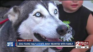 Joint effort leads to recovery of stolen dog from OKC