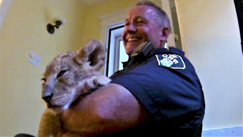 Police officer cuddles a lion cub on the best call of his career