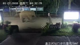 Wild elephant crosses through China-Laos border checkpoint - Video