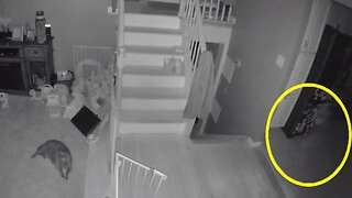 CCTV SHOWS GHOST OF 'LITTLE BOY AND PET' WALKING THROUGH FAMILY HOME