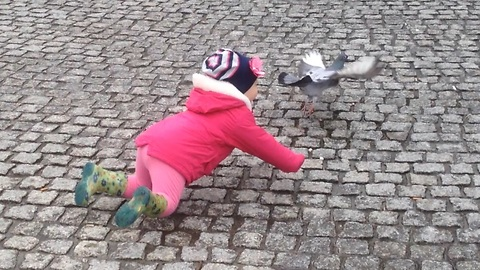 Toddler tries to catch pigeon, fails miserably
