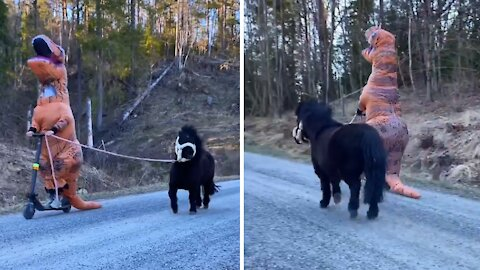 Is this the coolest possible way to exercise your pony?