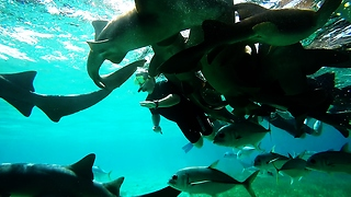 Swimmers see shark feeding frenzy from the inside - Video