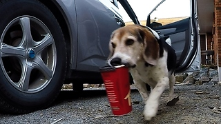 Rescue beagle steals owner's coffee from family van  - Video