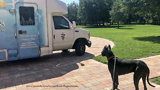 Great Dane's First Visit to Tampa Mobile Vet  - Video