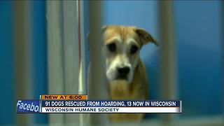 Wisconsin Humane Society receives shipment of abused Georgia dogs - Video