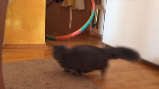 Cat is Scared of Moving Carpet and Falling Hul Hoop, Jumps high!