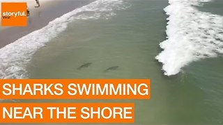 Multiple Sharks Swim Close to Myrtle Beach Shore - Video