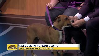 Pet of the week: 9-month-old Claire is a beautiful girl who needs a home - Video