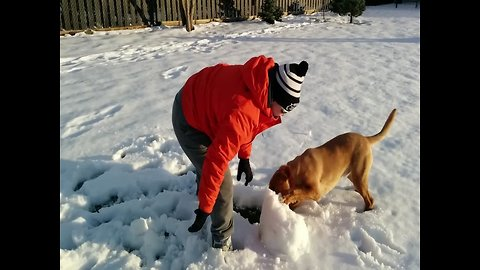 Dog Can't Get Enough of Playing in the Snow!
