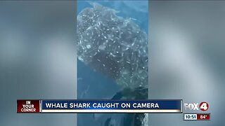 Whale Shark Caught on Camera