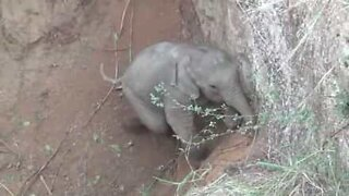Baby elephant rescued from a hole in India!