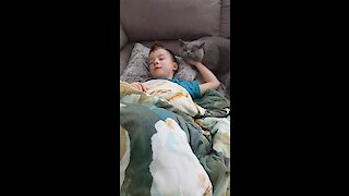 Sweet kitty wakes up little boy for playtime