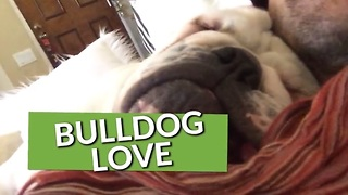 This Collection Of Bulldog Clips Shows Just Why We Love Them So Much. - Video