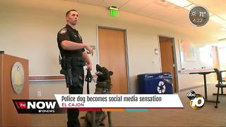 Police Dog Doubles as a Social Media Star - Video