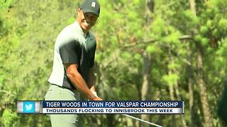 Tiger Woods brings extra fans to Valspar Championship at Innisbrook