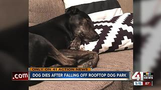 Dog dies after falling five stories off KC rooftop dog park; owner wants improved safety - Video