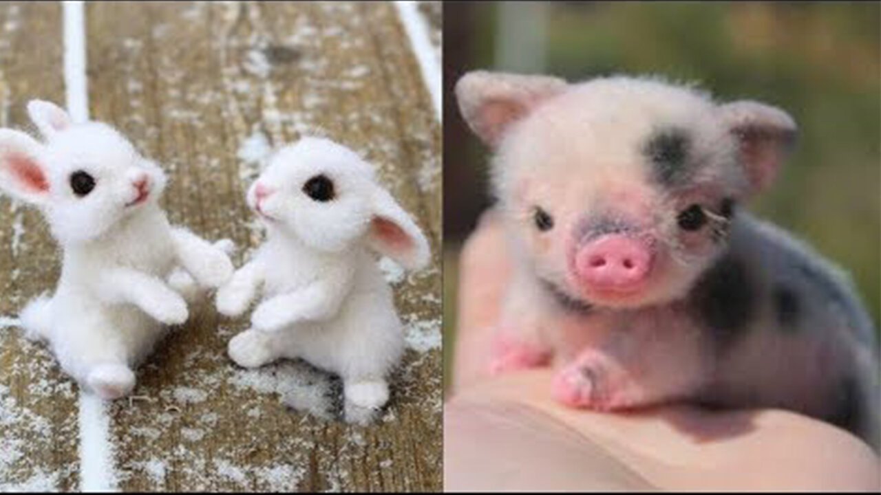 Cute Baby Animals Videos Compilation Cute Moment Of The Animals Cutest Animals On Earth 1