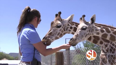 Out of Africa Wildlife Park: Meet the adorable baby giraffes!
