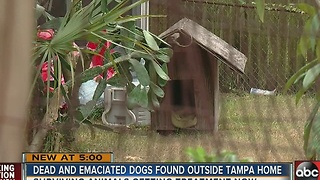 Officer finds dead and malnourished dogs at Tampa home - Video