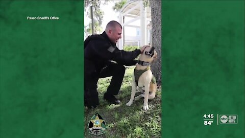 Pasco K9 deputy finds new role after beating cancer