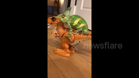 Chameleon Goes For A Ride On A Walking T-Rex toy