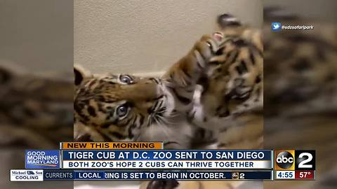 Tiger cub born at national zoo goes to San Diego