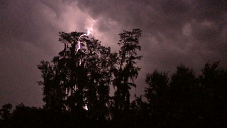 Amazing lightning storm over Cypress trees in Florida - Video
