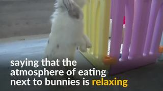Eating while petting a bunny in Hong Kong - Video