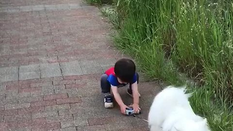 Baby Hilariously Struggles To Grab Dog's Leash