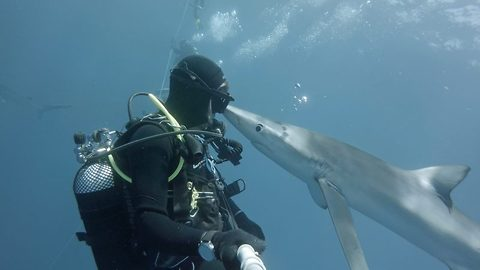 I fin-k you're jaws-some! Heart stopping moment curious shark gives diver kiss in once in a lifetime footage