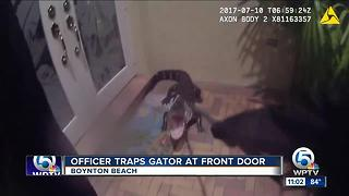 Boynton police officer captures alligator - Video