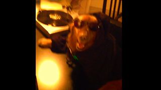 DJ Dog Drops The Beat