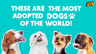 5 most adopted dog breeds