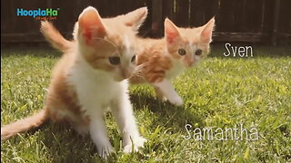 Kittens First Day Outside