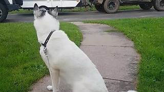Dog ecstatic to be reunited with owner after 5 days apart