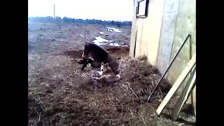 Horse and dog are clearly best friends - Video
